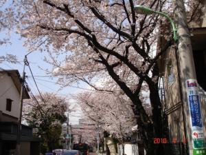 深沢方面から桜新町方面への一方通行の桜