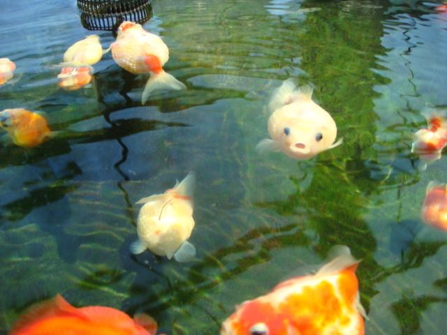 アクアマリン魚3