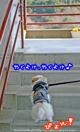 140117_sukumadani1.jpg