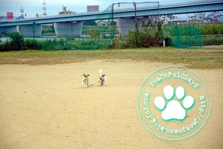 140924_kinokawa1.jpg