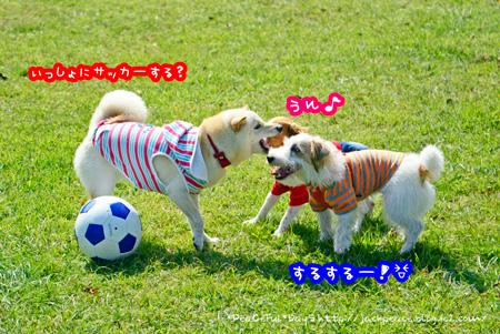 140928_biwako15.jpg