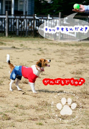 141030_yuasa1.jpg