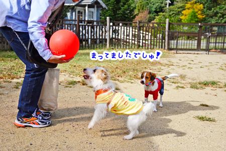 141030_yuasa6.jpg