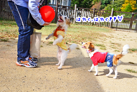 141030_yuasa7.jpg
