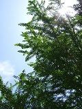 0014_20100718195555.jpg