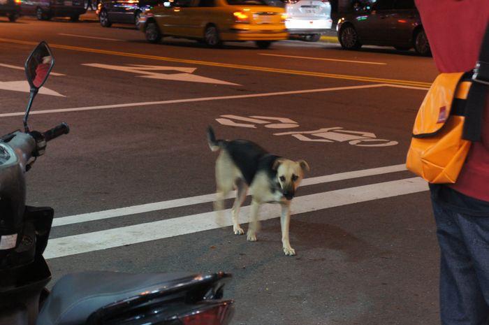 台湾・野犬