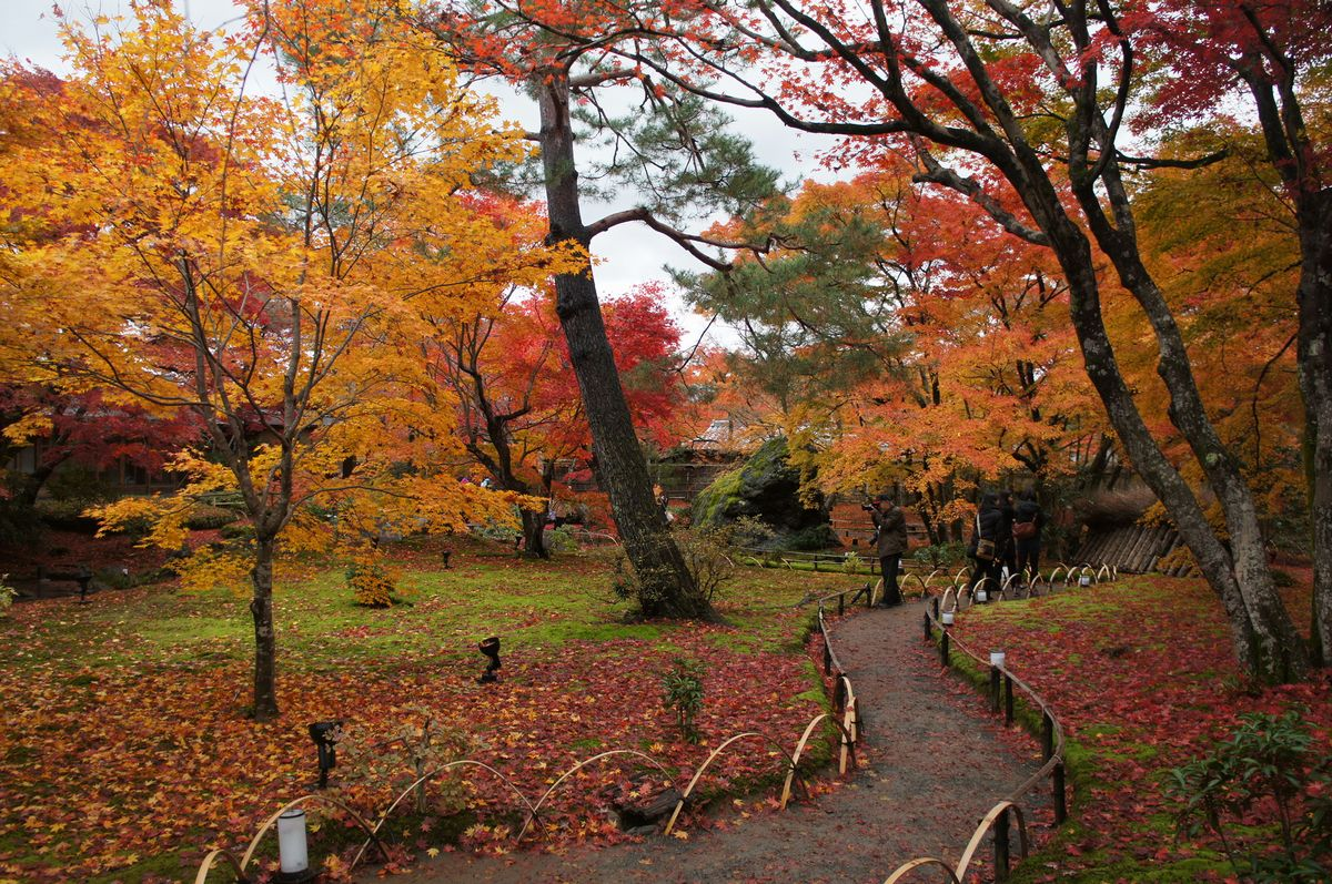 京都宝厳院2