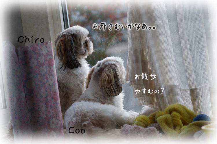 DSC01471_7365.jpg