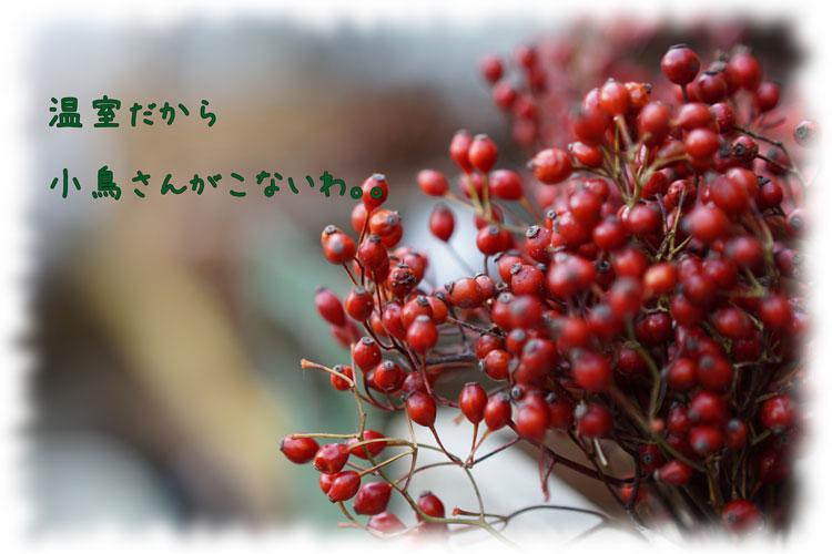 DSC02649_8354.jpg