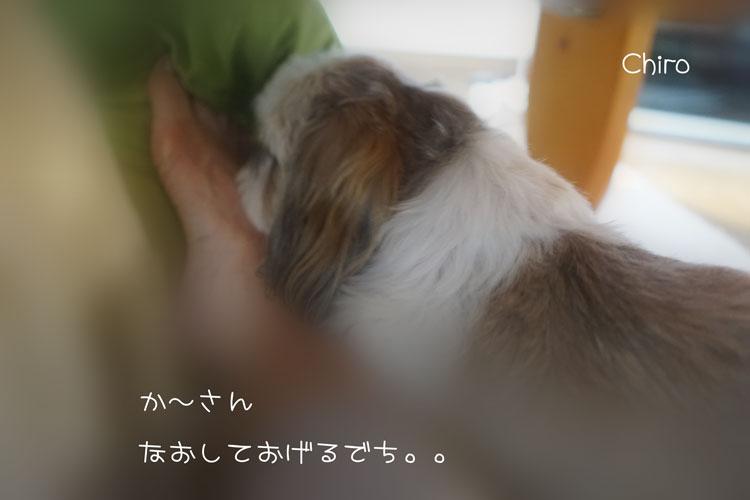 t_201412182132079e7.jpg