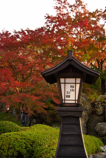 111113桜山02