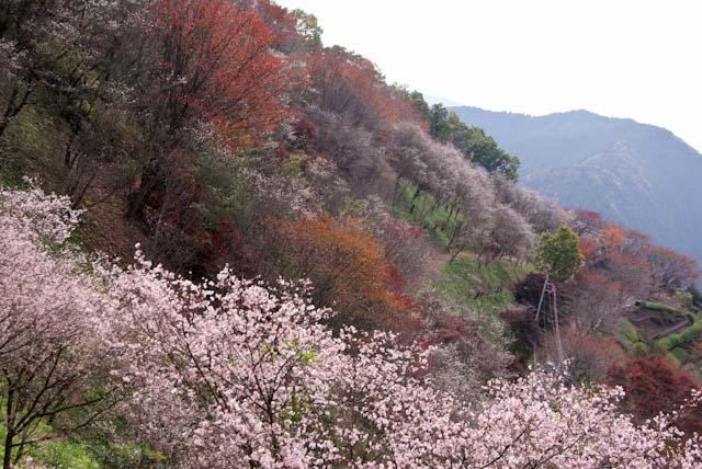 111113桜山09
