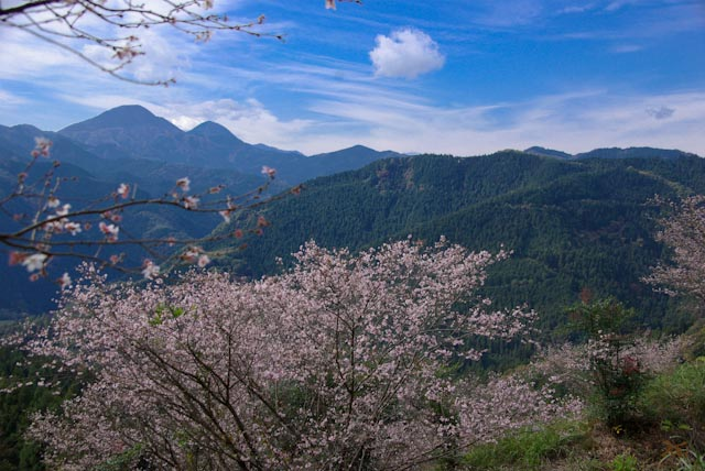 111113桜山08