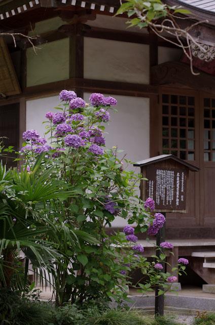 20120701大中寺03