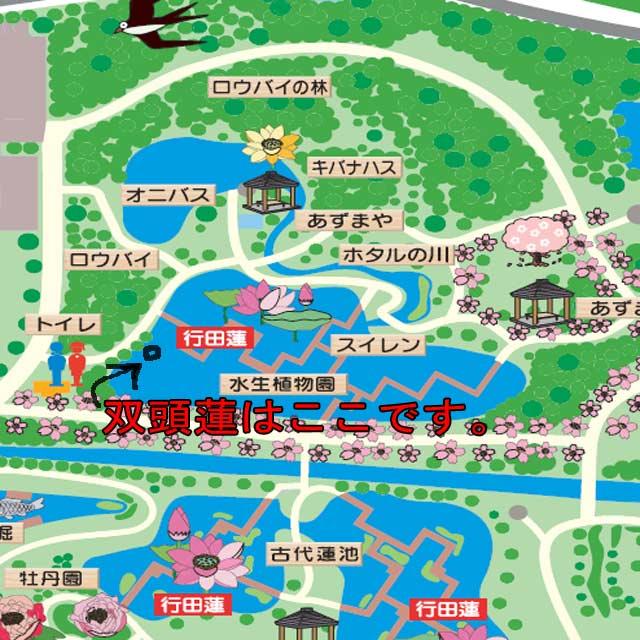 双頭蓮map