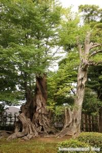 兼六園(石川県金沢市兼六町)6