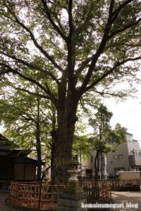 小杉神社(川崎市中原区小杉御殿町)14