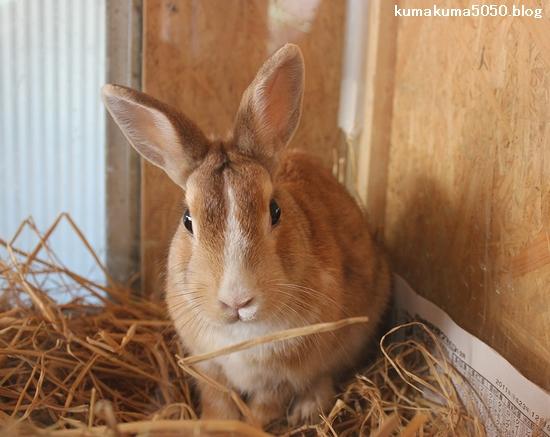 ウサギ_4
