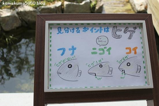 京都水族館_26