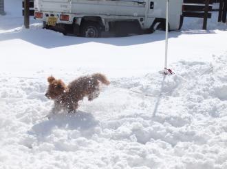 楽しい雪の日1