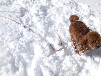 楽しい雪の日3