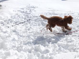 楽しい雪の日2