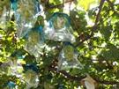 budou-20110918-09s.jpg