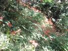 budou-20110918-26s.jpg