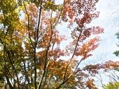 fp-20121008-23s.jpg