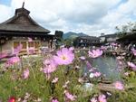 hananomiyako-20120908-03s.jpg