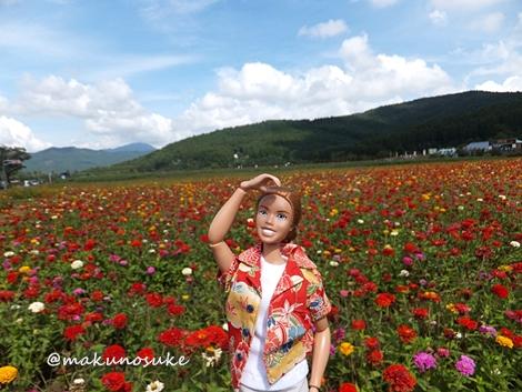 hananomiyako-20120908-10s.jpg