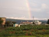 higanbana-20120923-04s.jpg