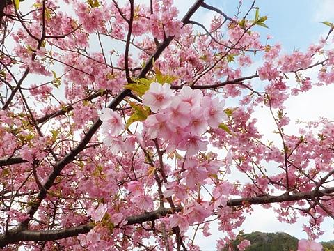 kawadu-20130302-06s.jpg