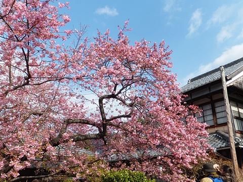 kawadu-20130302-10s.jpg