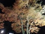 nijinosato-20111126-15s.jpg