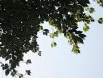 nijinosato-20120429-12s.jpg
