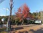 nijinosato-20121118-04s.jpg