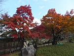 nijinosato-20121118-09s.jpg