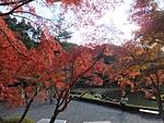 nijinosato-20121118-12s.jpg
