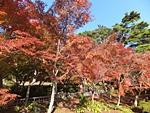 nijinosato-20121118-13s.jpg