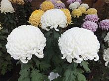 rakujyuen20111112-09s.jpg