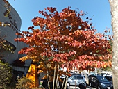 yamanashi-20121103-15s.jpg