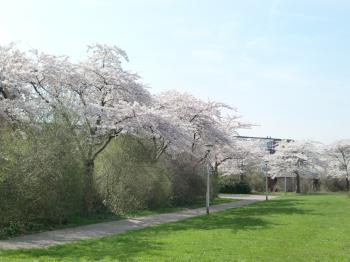 2010春③