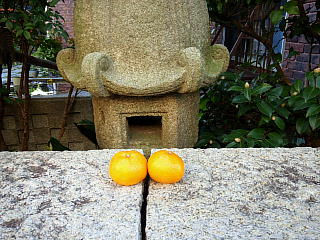 131130_1743住宅の石塀の上の蜜柑