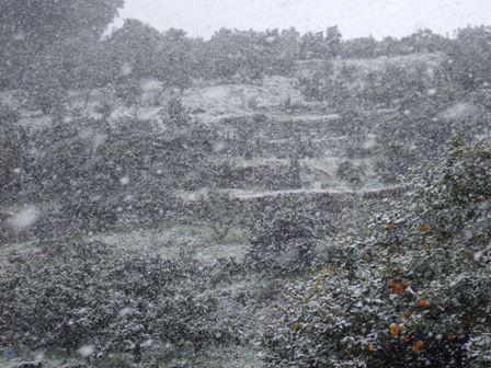 2/18和歌山ではめったにない吹雪が!!