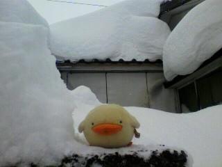 雪がもつもつと・・・