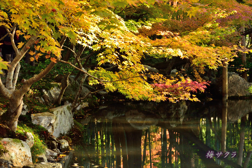 京都2(1)変更済