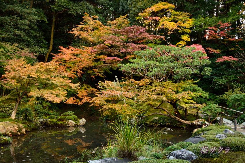 京都4(6)変更済