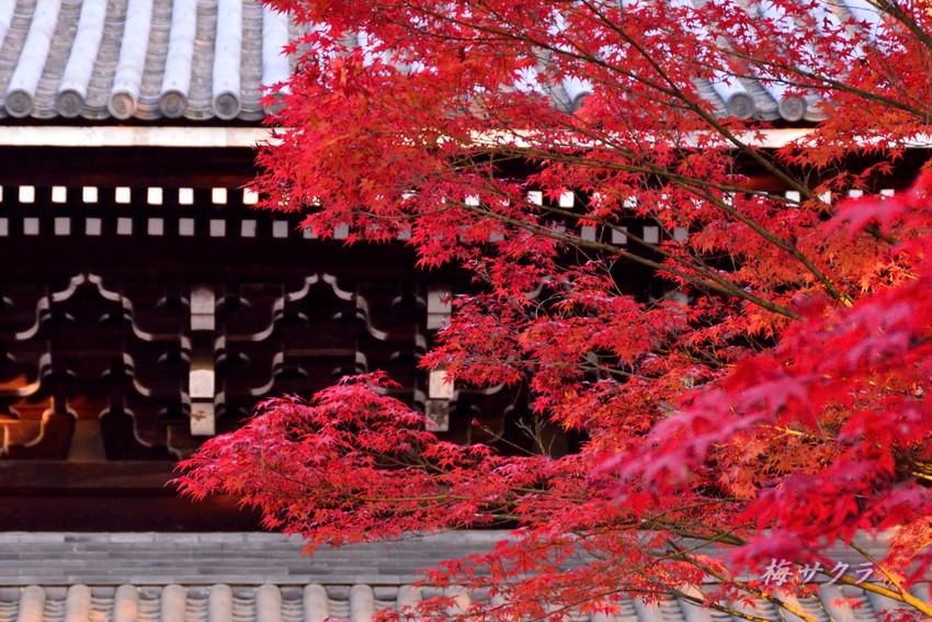京都5(2)変更済