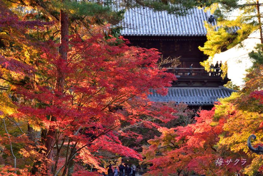 京都5(6)変更済